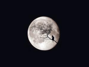 5043279-moon.jpg