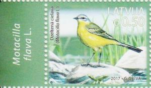 Western-Yellow-Wagtail-Motacilla-flava.jpg