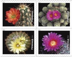 kaktusi-sha_1.jpg