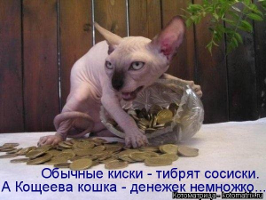 1440748463_kotomatricy-13.jpg