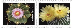 kaktusi-sha_2.jpg